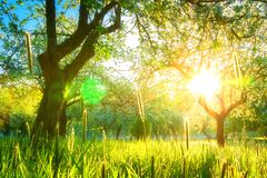 Zonneschijn in de lentetuin royalty-vrije stock fotografie