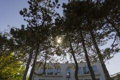 Zonneschijn door bomen Royalty-vrije Stock Afbeelding
