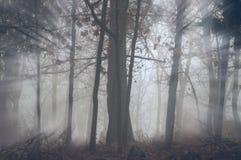 Zonneschijn door de bomen in de mist Stock Foto