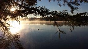 Zonneschijn door de bomen op het meer royalty-vrije stock foto