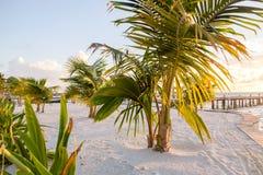Zonneschijn door de palmvarenbladen stock foto