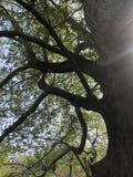 Zonneschijn door groene takken Stock Foto