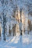 Zonneschijn door het bos Royalty-vrije Stock Foto's