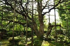 Zonneschijn en Bomen Royalty-vrije Stock Foto