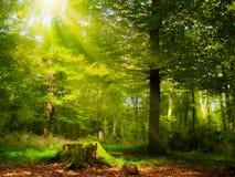 Zonneschijn in het bos Stock Foto's