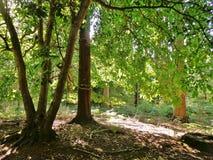 Zonneschijn in het bos Royalty-vrije Stock Foto