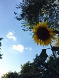 zonneschijn stock foto's