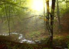 Zonneschijn in het hout Royalty-vrije Stock Afbeeldingen