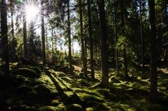 Zonneschijn i een groen bemost bos royalty-vrije stock fotografie