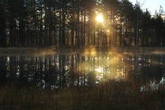 Zonneschijn in mist Royalty-vrije Stock Foto's