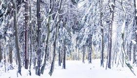 Zonneschijn onder het landschap van de de winter kalme berg met mooi Royalty-vrije Stock Foto