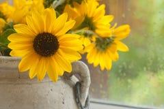 Zonneschijn op een Regenachtige Dag Stock Afbeelding