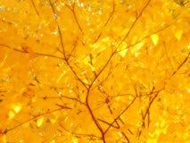 Zonneschijn op gele bladeren Royalty-vrije Stock Foto