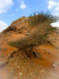 Zonneschijn op het zandduinen van Doubai Royalty-vrije Stock Afbeeldingen