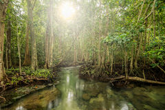 Zonneschijngloed in Mangrovebos in Tha Pom, Krabi Thailand Stock Fotografie