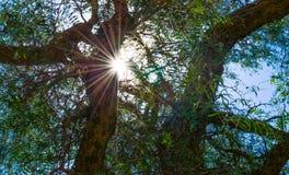 Zonnestraal die door bomen glanzen royalty-vrije stock fotografie
