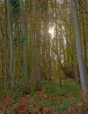 Zonnestraal die door de takken van Raspaillebos-bos op een de herfstdag glanzen royalty-vrije stock afbeeldingen
