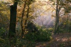 Zonnestraal die rijk vergankelijk bos ingaat stock afbeeldingen