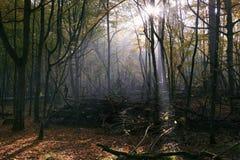 Zonnestraal die rijk vergankelijk bos ingaat stock foto's