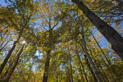 Zonnestraal door Autumn Woodland royalty-vrije stock afbeeldingen