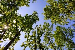 Zonnestraal door bladeren in een bos royalty-vrije stock foto's