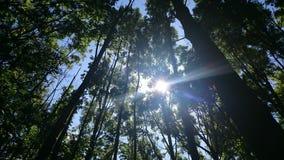 Zonnestraal door bomen Royalty-vrije Stock Fotografie