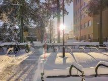 Zonnestraal door boomlogboek met mooie openluchtvibes en glanzende bezinning van sneeuw stock foto's