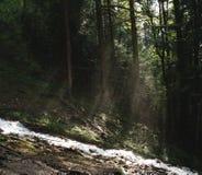 Zonnestraal door bos verlichtende rivier terwijl zonsondergang stock fotografie