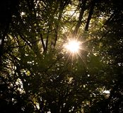 Zonnestraal door de bomen Stock Foto