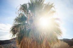 Zonnestraal door de varenbladen van een palm royalty-vrije stock afbeeldingen