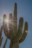 Zonnestraal door de wapens van een saguarocactus in de Sonoran-Woestijn stock afbeelding