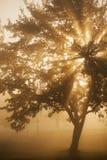 Zonnestraal door een boom Royalty-vrije Stock Afbeeldingen