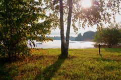 Zonnestraal door een boom dichtbij een rustig meer royalty-vrije stock foto's