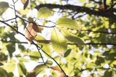 Zonnestraal door gedetailleerde bladeren tijdens de herfst royalty-vrije stock foto