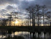 zonnestraal in het moeras stock afbeeldingen