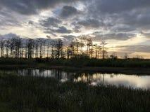 zonnestraal in het moeras stock foto