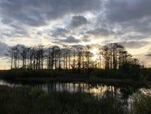 zonnestraal in het moeras royalty-vrije stock foto's