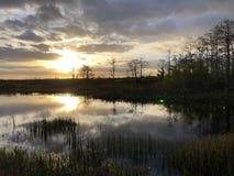 zonnestraal in het moeras royalty-vrije stock afbeelding