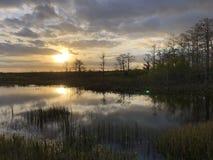 zonnestraal in het moeras stock foto's