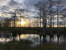zonnestraal in het moeras royalty-vrije stock foto