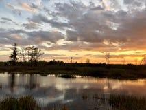 zonnestraal in het moeras stock fotografie