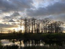 zonnestraal in het moeras stock afbeelding