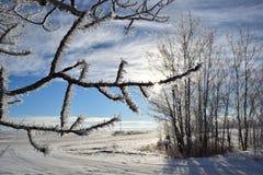 Zonnestraal ijzige bomen royalty-vrije stock foto's