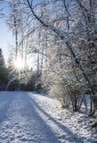 Zonnestraal met boomschaduwen in de winter stock fotografie