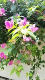Zonnestraal op de roze bloemen royalty-vrije stock afbeeldingen
