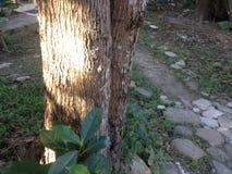Zonnestraal op een boom stock afbeeldingen