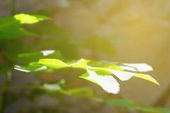 Zonnestraal op groen blad, Heldere zon in de lentebos stock fotografie