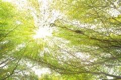 Zonnestraal over tropisch bos royalty-vrije stock foto