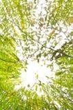 Zonnestraal over tropisch bos royalty-vrije stock fotografie
