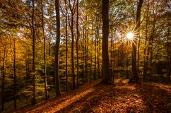 Zonnestraal zichtbaar door de takken van de bomen royalty-vrije stock foto's